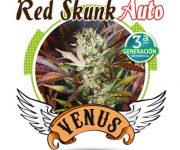 1 UND FEM - RED SKUNK AUTO