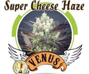 1 UND FEM - SUPER CHEESE HAZE