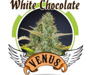 1 UND FEM - WHITE CHOCOLATE