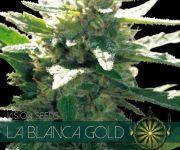 10 UND FEM - LA BLANCA GOLD