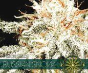 10 UND FEM - RUSSIAN SNOW