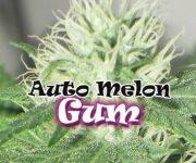 2 UND FEM - AUTO MELON GUM