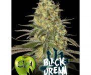 6 UND FEM - BLACK DREAM