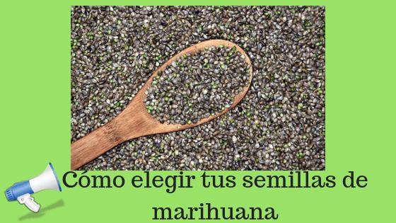 Como elegir tus semillas de marihuana