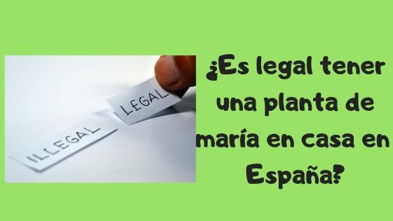 es legal tener una planta de maría en casa en España