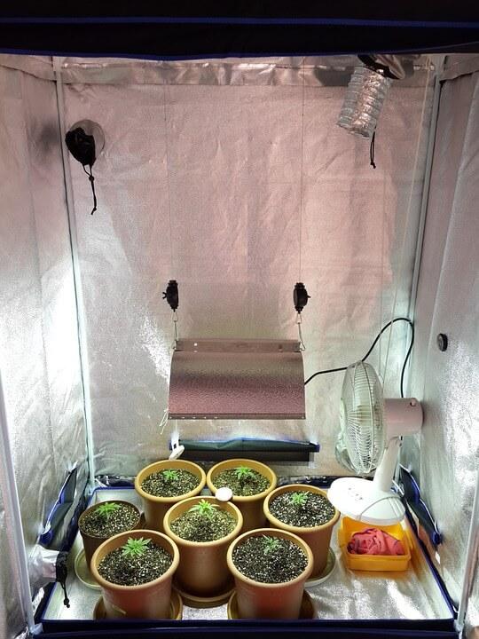 cultivo interior bajo consumo