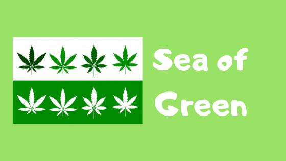 sea of green grow